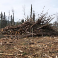 Up in smoke: B.C. backtracks on promise to deter logging industry from burning wood waste